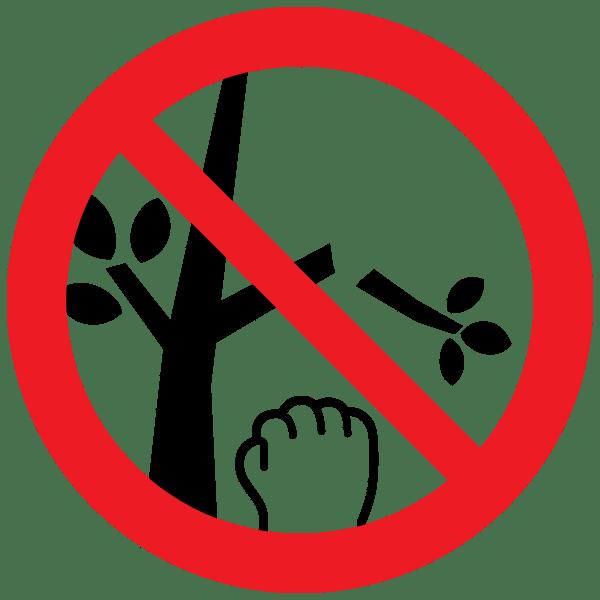 木々の損傷や採取禁止